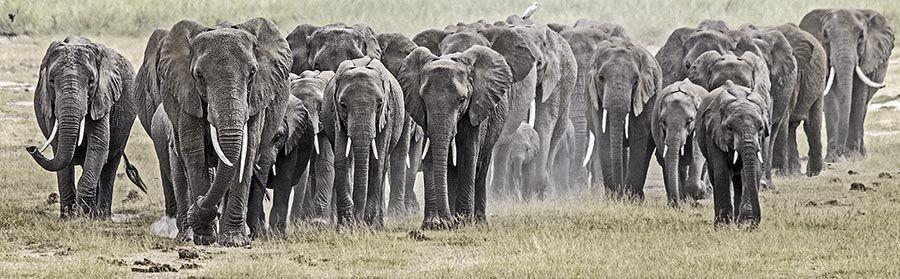 ZPA-Benny-Rebel-Fotoreise-Kenia-Lake-Amboseli