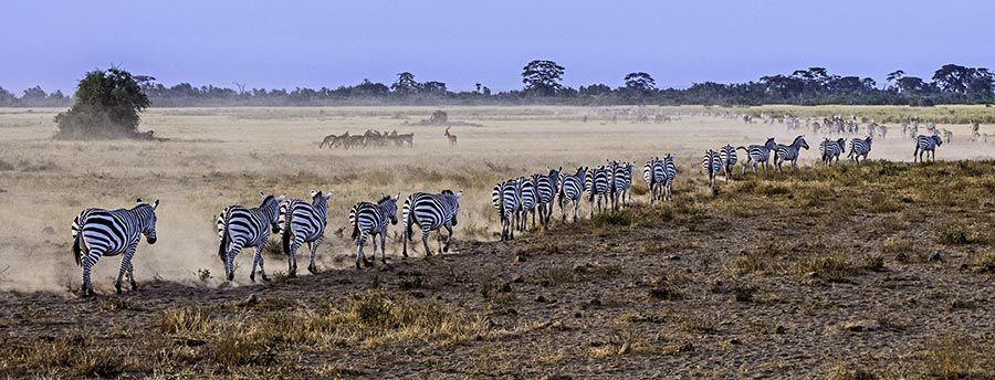ZPA-Benny-Rebel-Fotoreise-Kenia-Zebra
