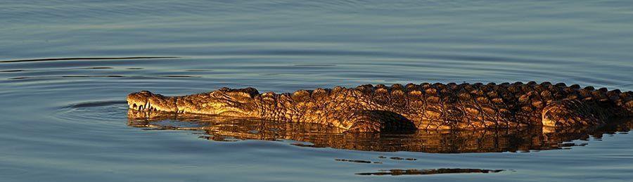 ZPA-Benny-Rebel-Fotoreise-Suedafrika-Krokodil