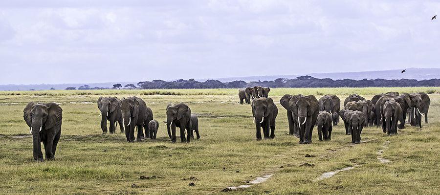 ZPB-Benny-Rebel-Fotoreise-Kenia-Lake-Amboseli