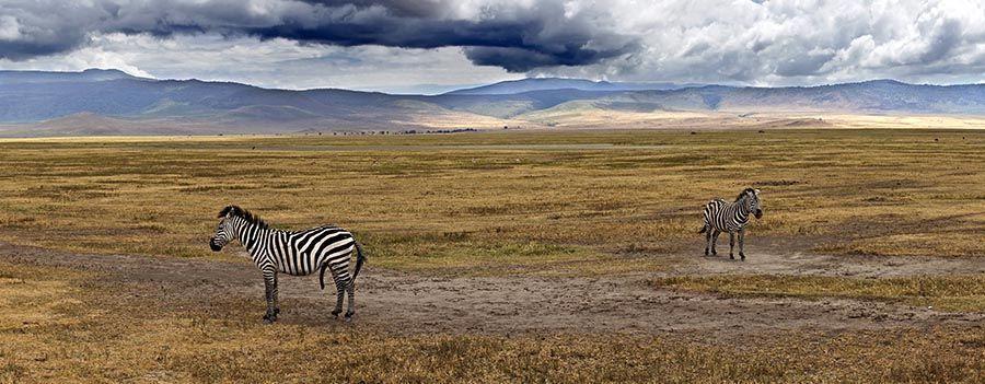 ZPB-Benny-Rebel-Fotoreise-Tansania-Zebra