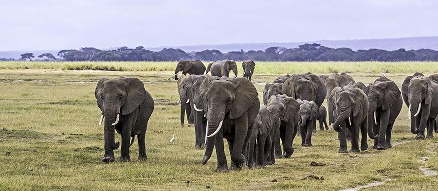 ZPC-Benny-Rebel-Fotoreise-Kenia-Lake-Amboseli