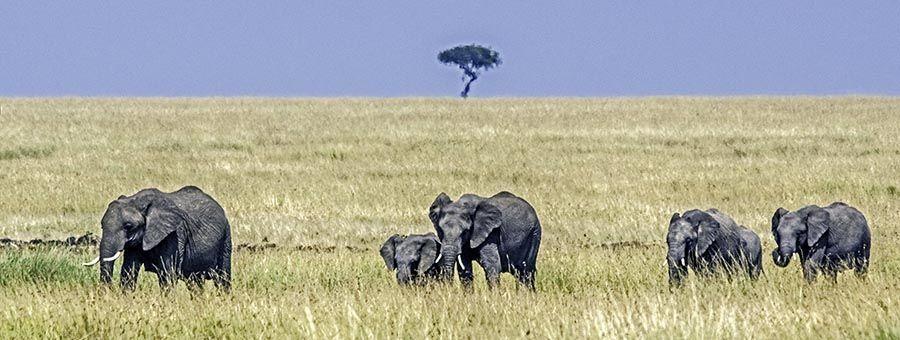 ZPD-Benny-Rebel-Fotoreise-Kenia-Maasai-Mara