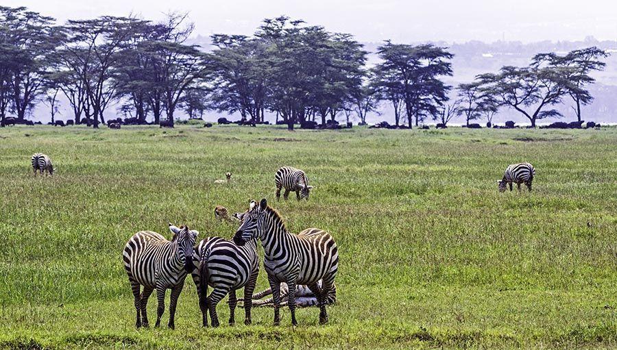 ZPE-Benny-Rebel-Fotoreise-Kenia-Zebra