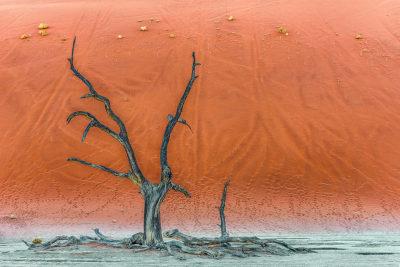 DEAD-TREE-Benny-Rebel, Fine Art Print, Benny Rebel, Fotografie, Bild, Druck