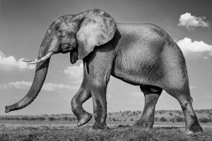 Fotoreise durch Simbabwe und Botswana Fotosafari