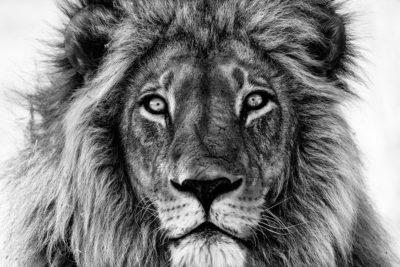 King of Okavango by Benny Rebel, Tierfotografie, Afrika