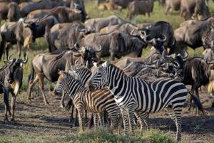 Fotoreise durch Tansania