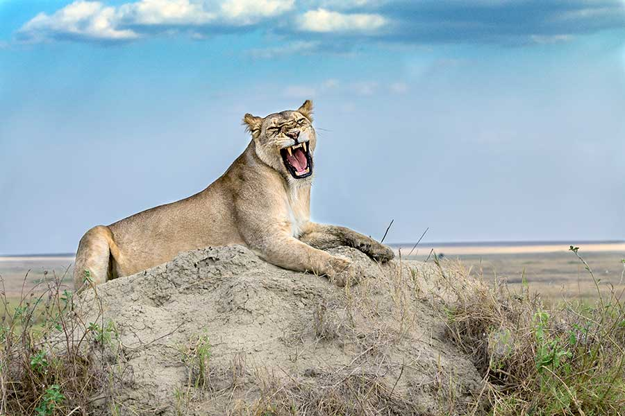 Benny-Rebel-Fotoreise_Fotosafari-Tansania-Ruanda-Afrika_A107
