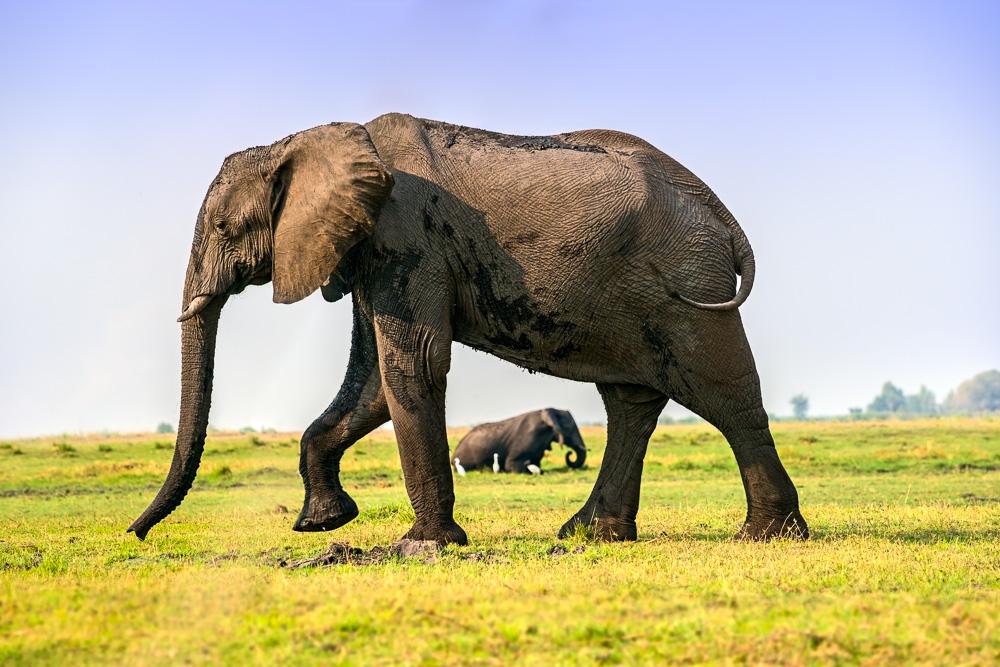 Fotoreise-Fotosafari-Botswana-Benny-Rebel-Afrika-Simbabwe-11