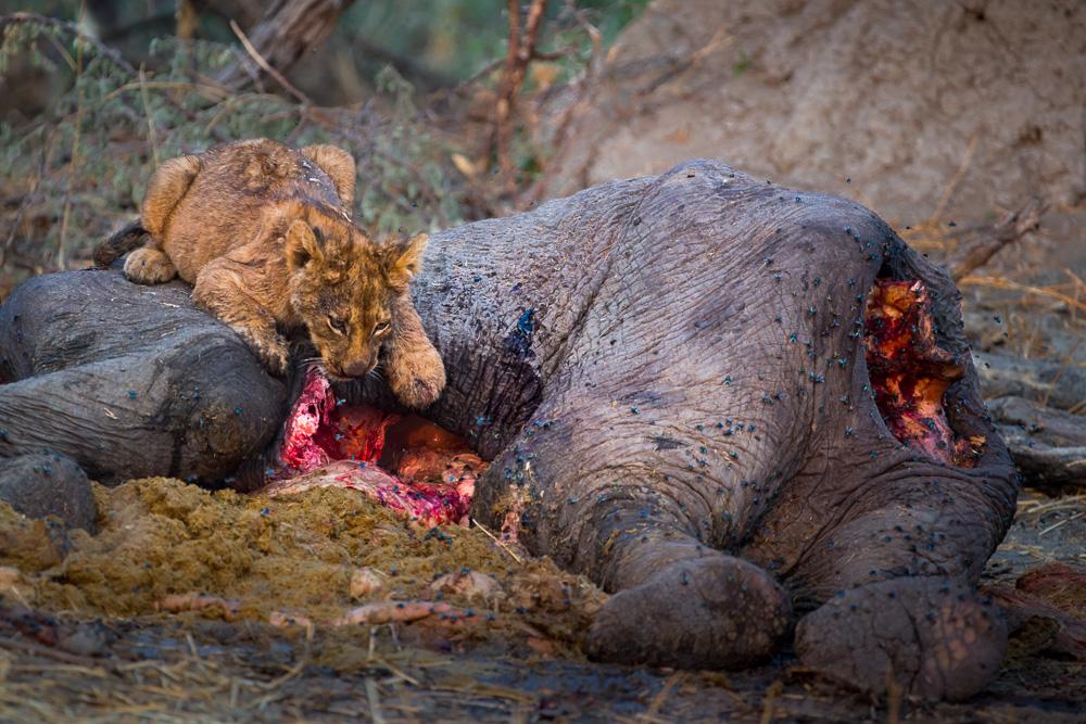 Fotoreise-Fotosafari-Botswana-Benny-Rebel-Afrika-Simbabwe-19