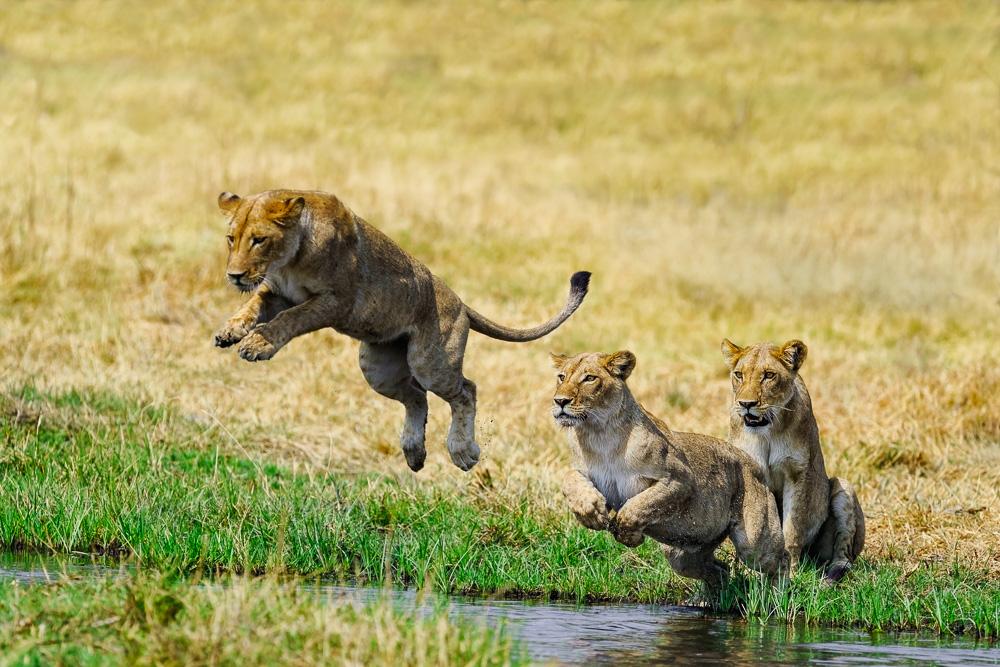 Fotoreise durch das Okavango Delta Botswana