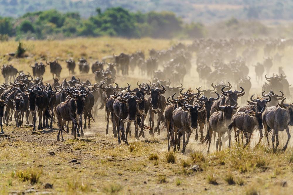 Fotoreise-Kenia-Fotosafari-Afrika-Benny-Rebel-1-4