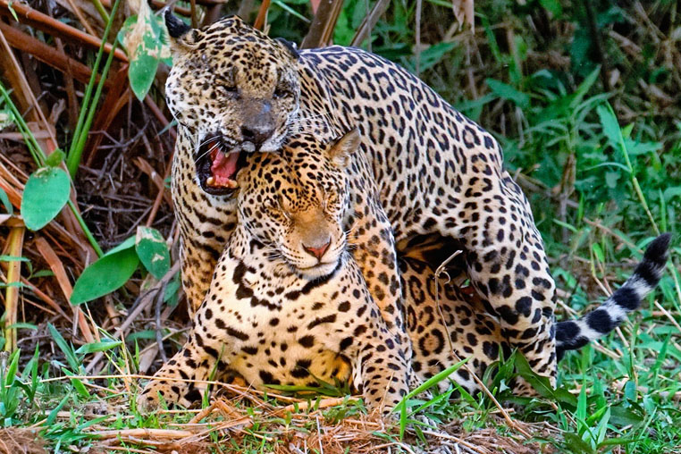 fotoreise-pantanal-fotosafari-brasilien-030
