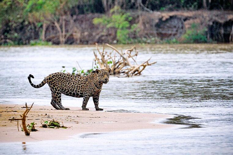fotoreise-pantanal-fotosafari-brasilien-014