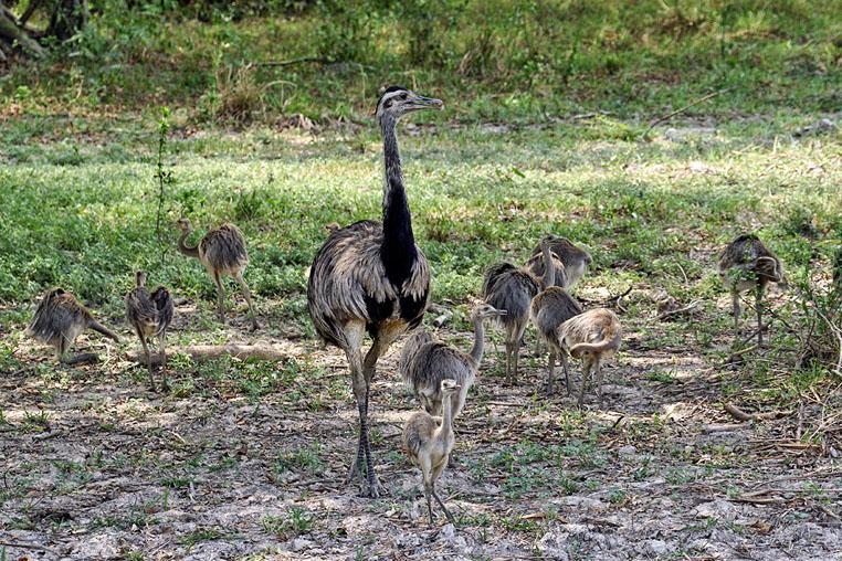 fotoreise-pantanal-fotosafari-brasilien-033