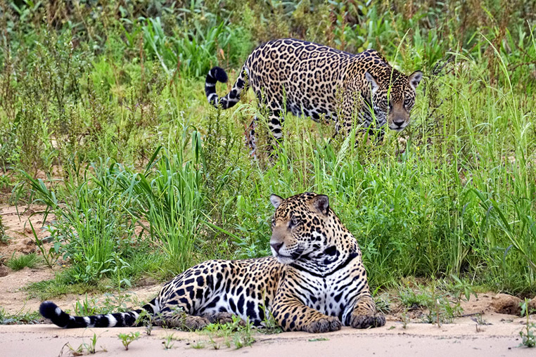 fotoreise-pantanal-fotosafari-brasilien-008