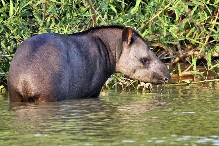 fotoreise-pantanal-fotosafari-brasilien-018