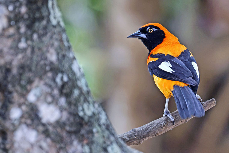 fotoreise-pantanal-fotosafari-brasilien-029
