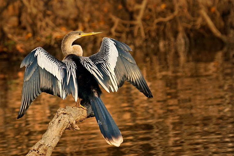 fotoreise-pantanal-fotosafari-brasilien-028