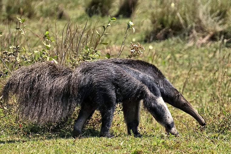 fotoreise-pantanal-fotosafari-brasilien-026