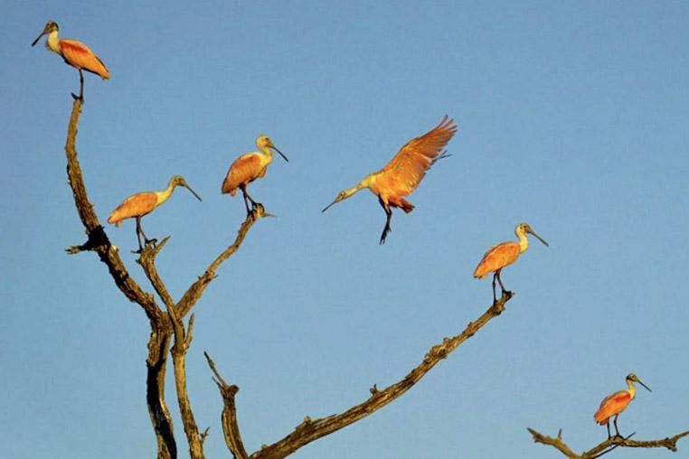 fotoreise-pantanal-fotosafari-brasilien-038