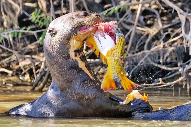 fotoreise-pantanal-fotosafari-brasilien-019