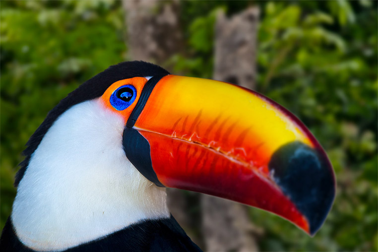 fotoreise-pantanal-fotosafari-brasilien-017
