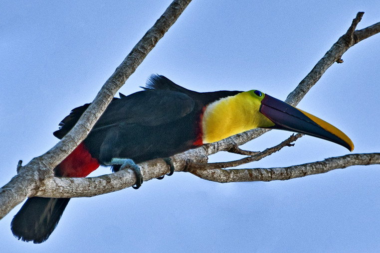 fotoreise-pantanal-fotosafari-brasilien-046
