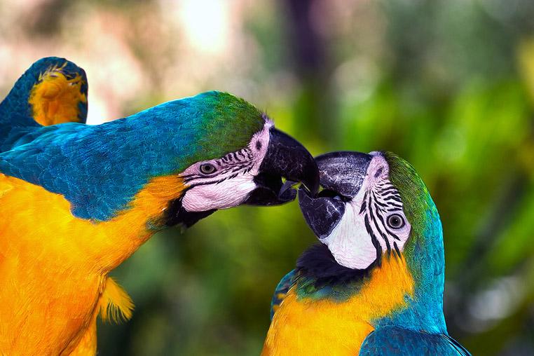 fotoreise-pantanal-fotosafari-brasilien-004