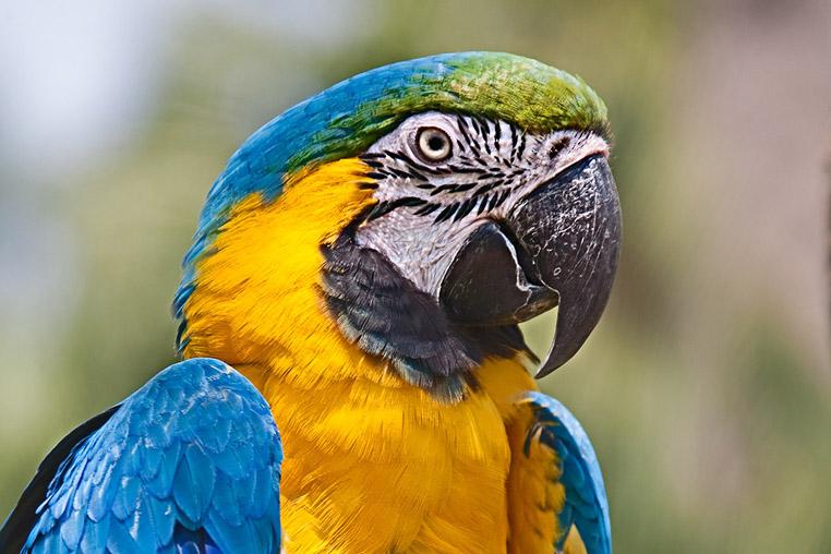 Fotoreise ins Pantanal mit Benny Rebel
