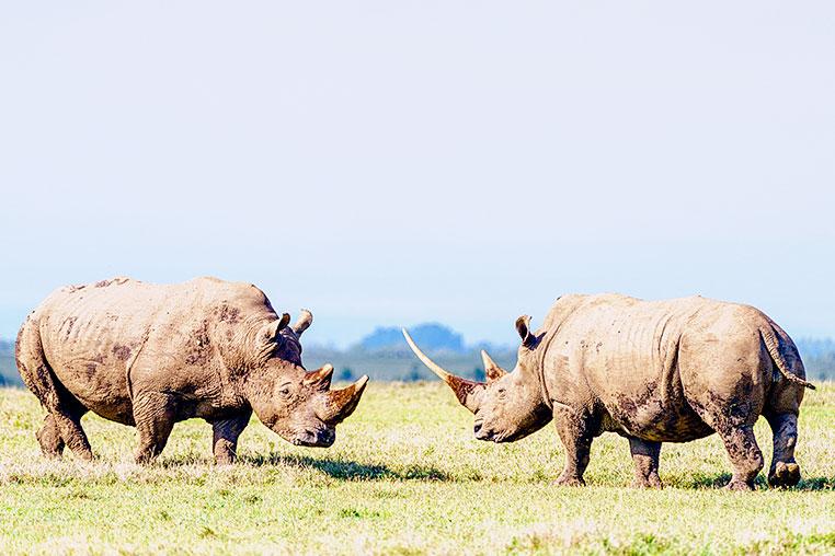 Fotosafari_Afrika_Fotoreise_Nord_Kenia_01