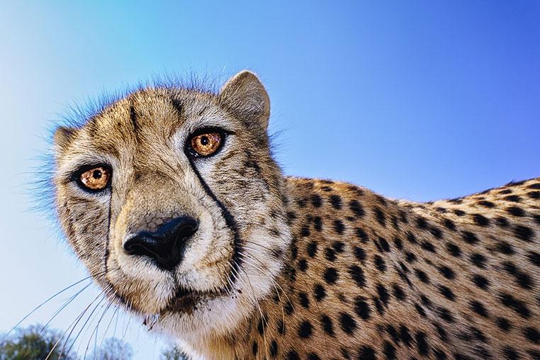 Fotosafari_Afrika_Fotoreise_Nord_Kenia_27