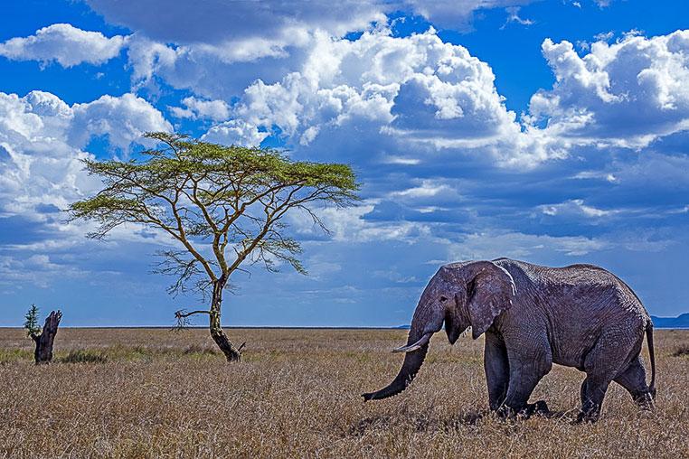 Fotosafari_Afrika_Fotoreise_Nord_Kenia_29