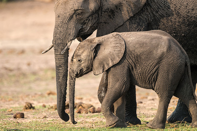 Fotosafari_Afrika_Fotoreise_Nord_Kenia_32