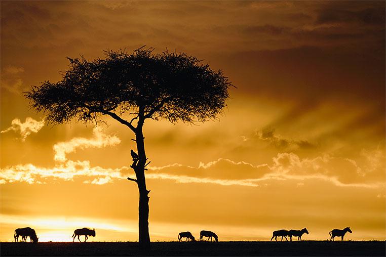 Fotosafari_Afrika_Fotoreise_Nord_Kenia_36