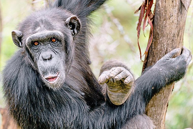 Fotosafari Kenias Norden