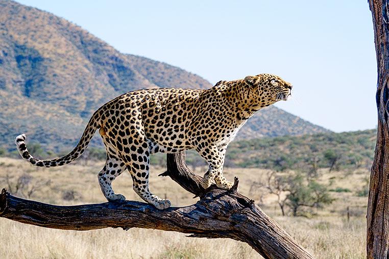 Fotosafari_Afrika_Fotoreise_Nord_Namibia_28