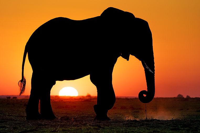 Fotosafari nach Botswana mit Benny Rebel