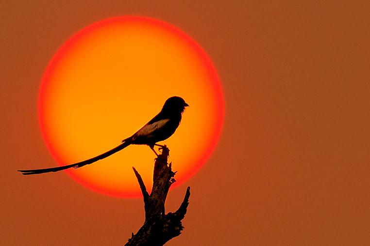 Fotosafari_Botswana_Fotoreise_Vic-Falls_03