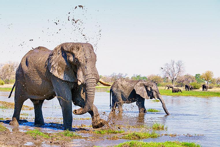 Simbabwe Fotosafari