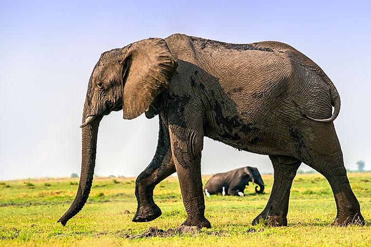 Fotosafari_Botswana_Fotoreise_Vic-Falls_10