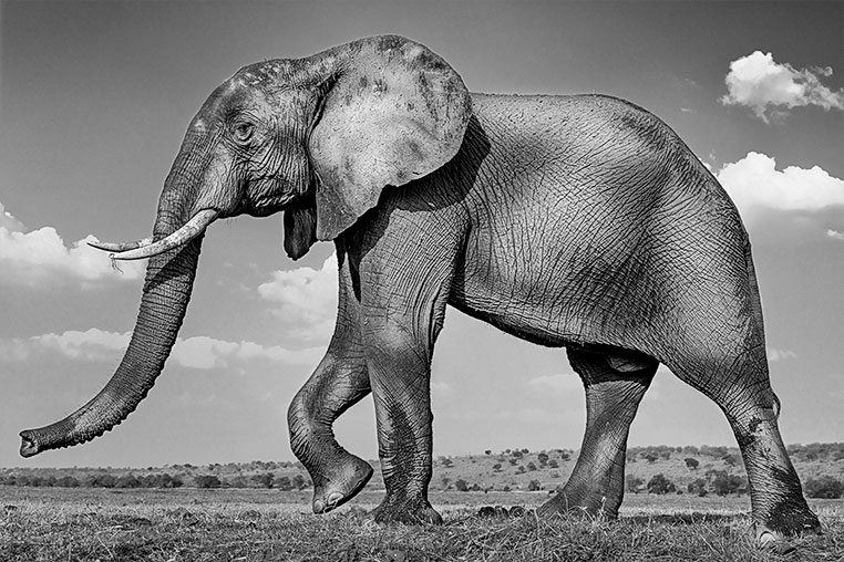 Fotosafari_Botswana_Fotoreise_Vic-Falls_11