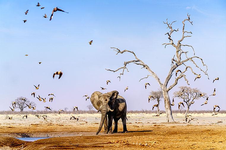 Fotosafari_Botswana_Fotoreise_Vic-Falls_12