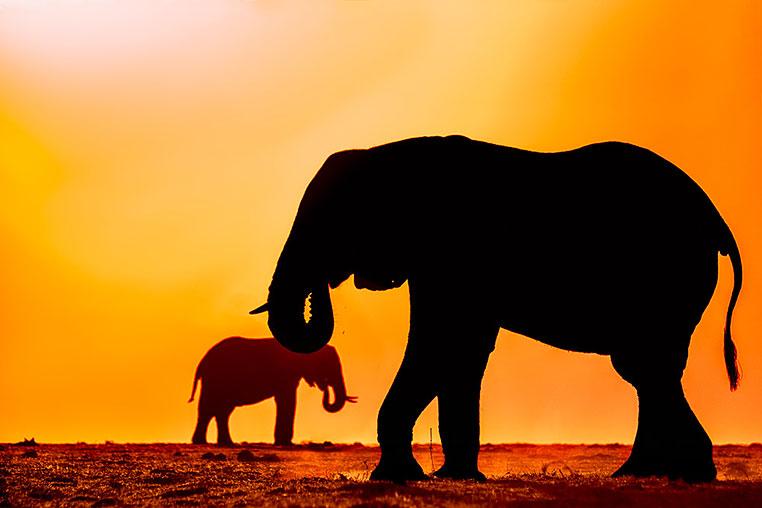 Fotosafari_Botswana_Fotoreise_Vic-Falls_15