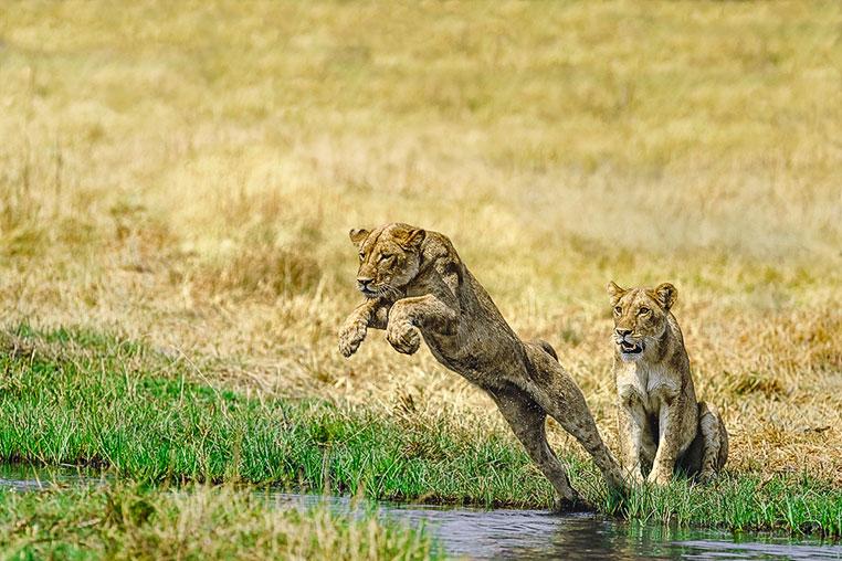 Fotosafari_Botswana_Fotoreise_Vic-Falls_23