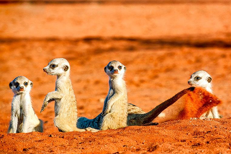Fotosafari_Namibia_Fotoreise_Sueden_Afrika_01