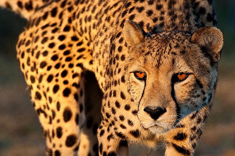 Fotosafari_Namibia_Fotoreise_Sueden_Afrika_22