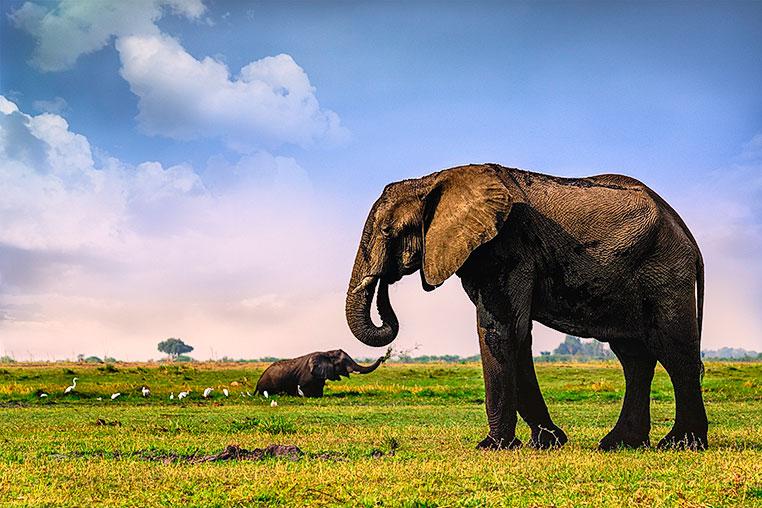 Fotosafari_Simbabwe_Fotoreis_Botswana_Chobe