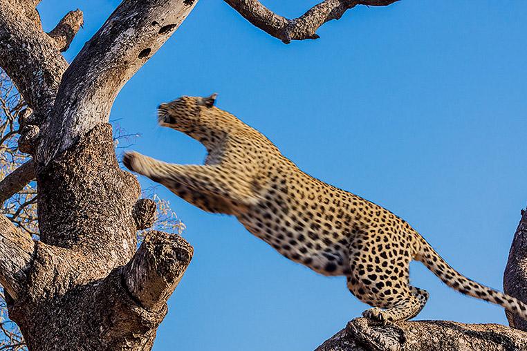 Fotosafari_Tansania_Fotoreise_Afrika_17